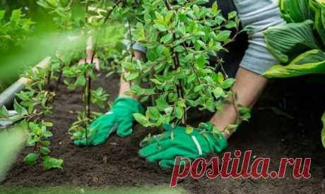 Основные ошибки при посадке деревьев | Красивый сад | Яндекс Дзен
