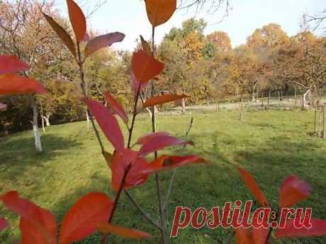 Наш сад сквозь листья черноплодки
