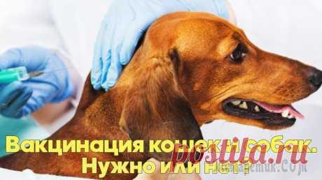 Вакцинация кошек и собак - нужна или нет? Когда волонтеры отдают бездомное животное, они рекомендуют его вакцинировать. Очень часто слышим в ответ - это ведь дворняжка, зачем ее вакцинировать? У дворняги и так отличный иммунитет. Нужно ли вак...