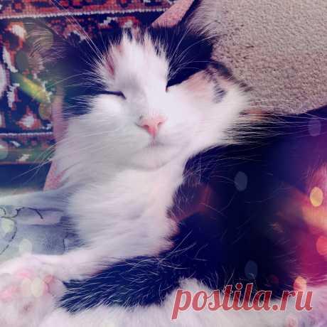 Моя любимая кошечка Мереана :з