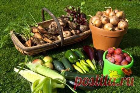 Кефир, сахар, соль и чеснок с успехом заменят химию на огороде