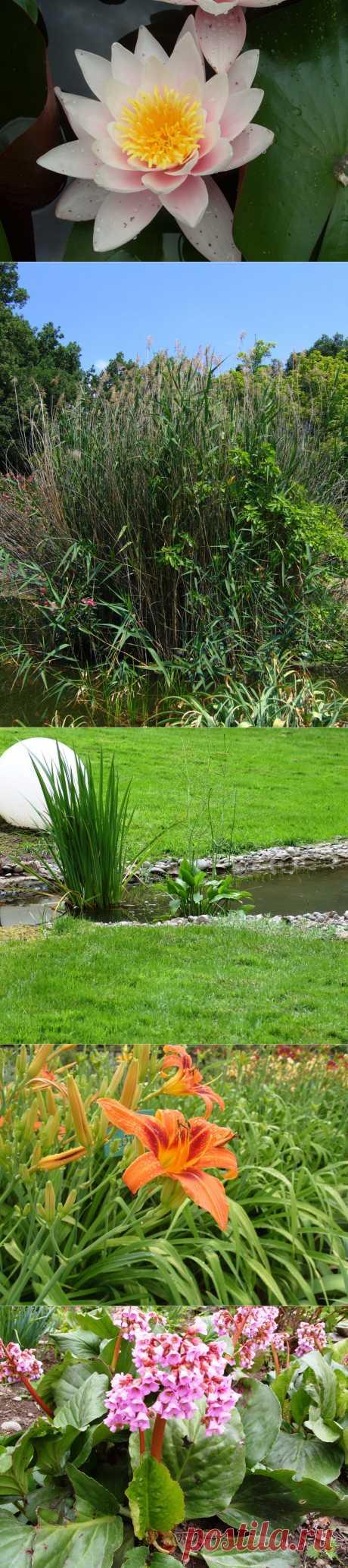 Съедобные растения в оформлении водоема.Группы водных растений:водных растений,прибрежно-водные растения и болотные.Зоны размещения растений в водоеме и рекомендуемые для них растения.