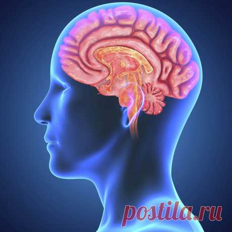 Как повернуть вспять старение вашего мозга...