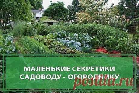 Маленькие секретики садоводу - огороднику. Добавь себе на стену, чтобы не забыть!  1. Йод для капусты. В ведро воды добавить 40 капель йода. Когда начнет формироваться кочан, поливать капусту под растение по 1 литру.  2. Ускорение пророста. Чтобы семена быстрее проросли их замачивают в растворе перекиси водорода (4%) на 12 часов (капуста), а семена помидоров и свеклы - на 24 часа. Для обеззараживания семян (вместо марганцовки) их обрабатывают 10% перекисью водорода 20 мину...