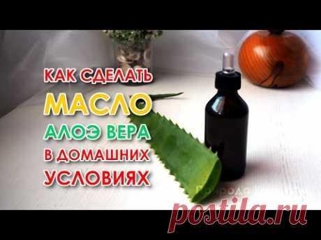 Как сделать масло Алоэ Вера в домашних условиях