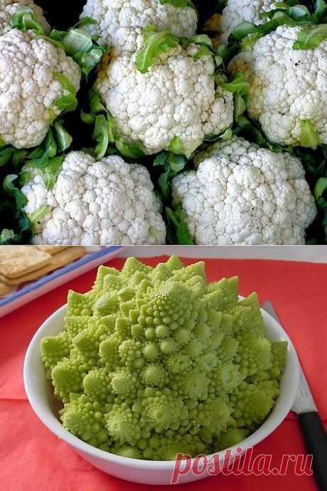 Выращивание и употребление цветной капусты » Садовед