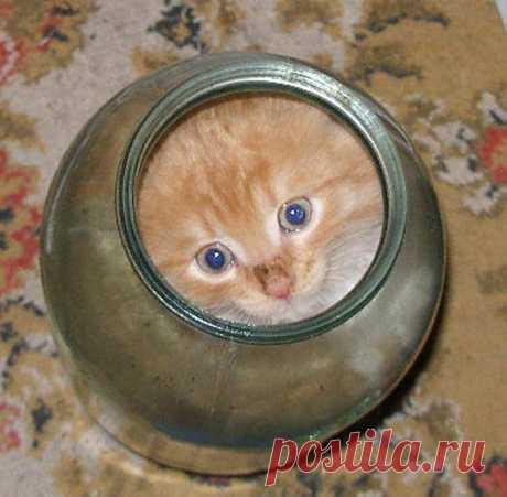 Кошки - это... жидкость! / Приколы
