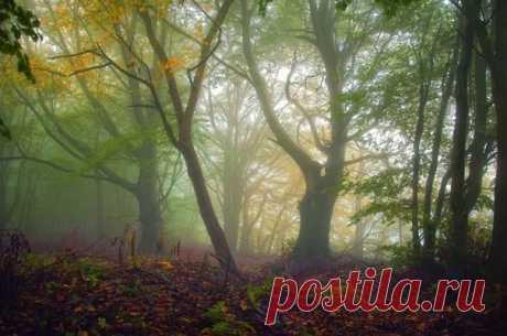 El bosque fantástico