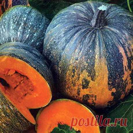 Виды, разновидности и сорта тыквы с фото
