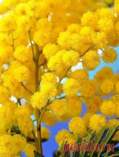 В преддверии Весны!☀️ Еще одна суббота... и Весна! 🌷 Звонила Весна! Счастливая, веселая... Я её спрашиваю: Ты где? А она мне: Да иду я уже... Иду! ...Весна начало новой надежды...