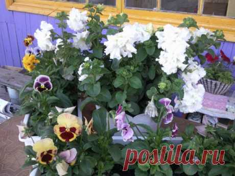 Miscellaneous >ЧУДО SOLUTION FOR FLOWERS.