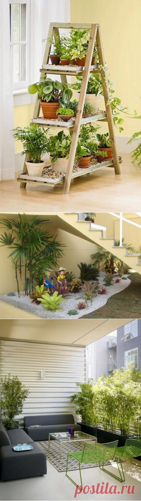 Интересные идеи домашних мини-садов