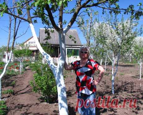 Весна, пора белить деревья! (состав побелки). » Женский Мир