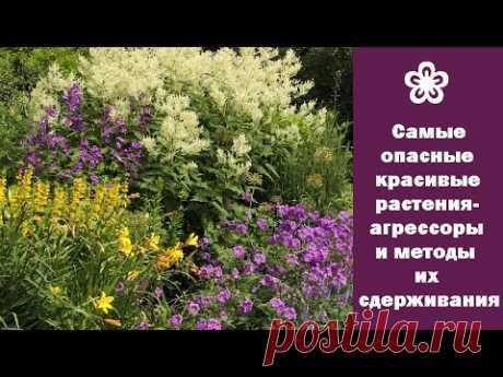 ❀ Самые опасные красивые растения-агрессоры и методы их сдерживания