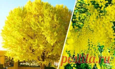 10 удивительных и красивых деревьев нашей планеты