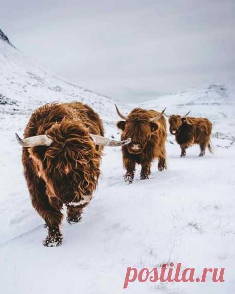 highlands | Tumblr