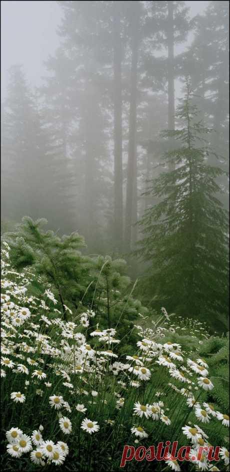 Lee Mann Photography :: Northwest mountains, seascapes, tulips, rivers, waterfalls  -  Источник: leemannphotography.com  |  Pinterest • Всемирный каталог идей