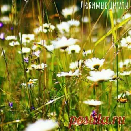 Лето - какое красивое слово. До чего же сладко оно звучит! От него так и веет блаженной ленью и солнечным светом.  Любимые цитаты