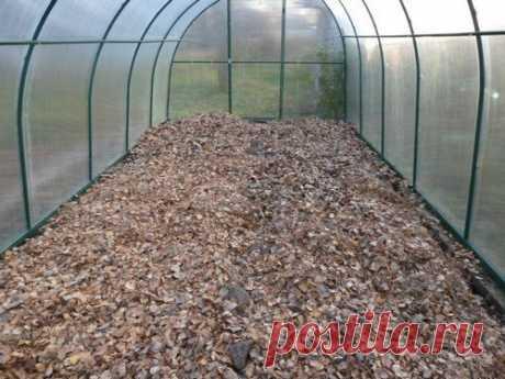 5 способов обеззаразить почву в теплице осенью