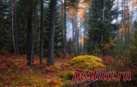 Тихо в осеннем лесу. Беларусь.