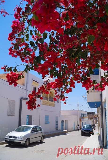 Cуcc, Тунис.