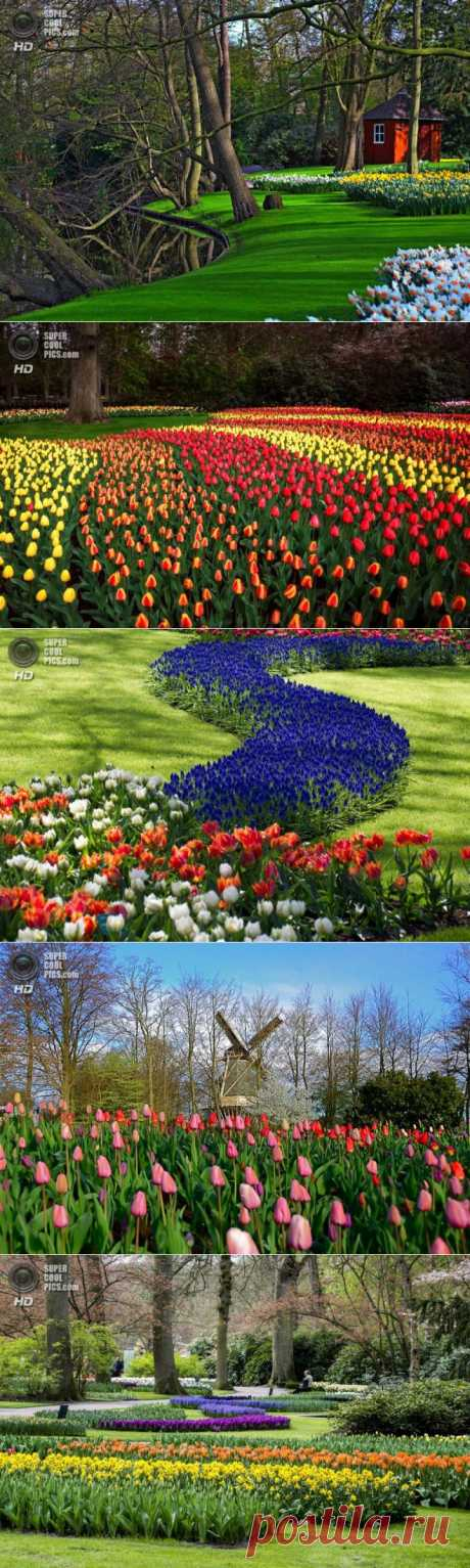 (+1) тема - Королевский парк цветов | Непутевые заметки