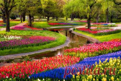 The best photos from all over the world - Blossoming of tulips worldwide