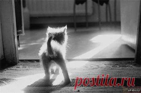 Для адекватной самооценки человеку нужна собака, которая будет его обожать и кошка,которая будет его игнорировать.