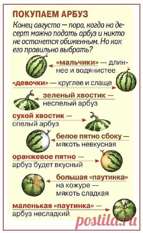 Выбираем арбуз