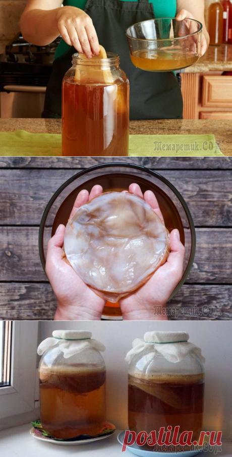 Чайный гриб: почему он так популярен и зачем его пить