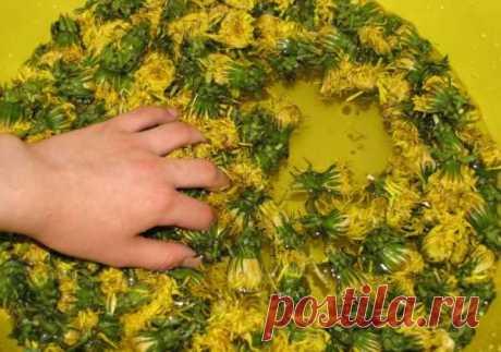 Этот золотой нектар чистит кровь и обновляет печень на клеточном уровне