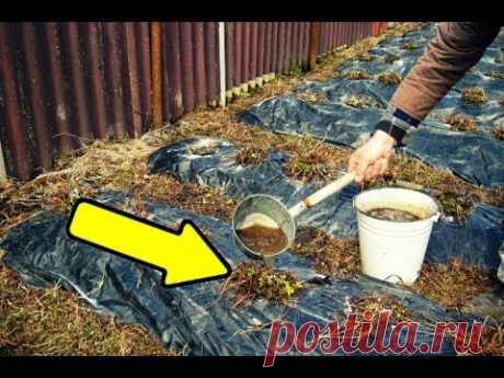 Подкормите этим клубнику осенью в сентябре для мощного урожая на следующий год!