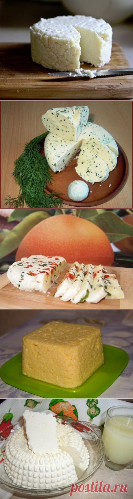 ТОР — 14  Подборка вкусных домашних сыров! |
