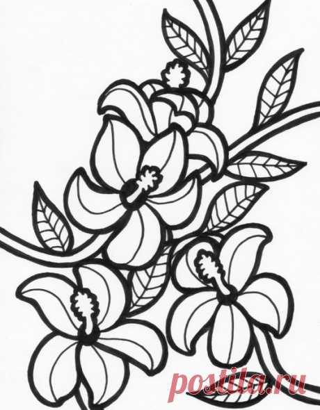 Эскизы цветов для рисования | БАТИК и Я