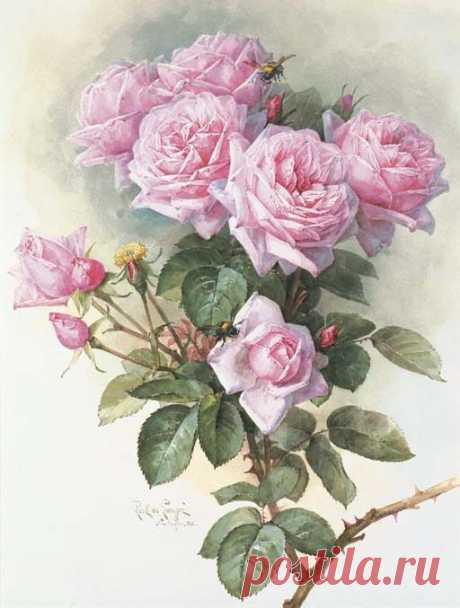 Paul de Longpre (1855–1911) - известный французский и американский художник в области цветочной акварели и литографии. (часть-2).