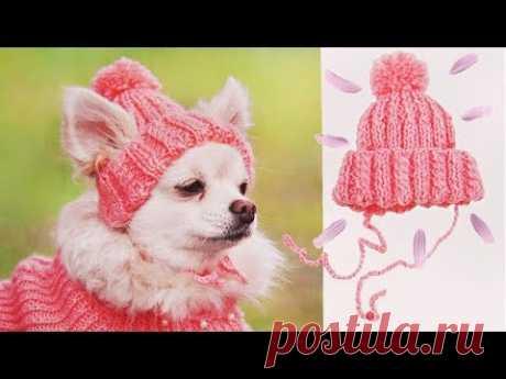 ШАПКА ДЛЯ СОБАКИ | DIY HAT FOR DOG
