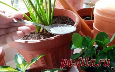 3 полезных удобрения для комнатных цветов в период покоя: чем подкормить, чтобы дать сил, но не разбудить