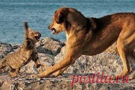 Почему кошки боятся собак? - Yvision.kz