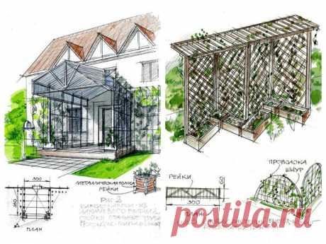 Вертикальное озеленение сада: 3 способа ландшафтного дизайна