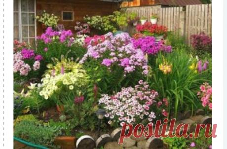 Однолетние цветы для дачи, цветущие все лето (47 фото): красивые, неприхотливые однолетники, растения для огорода и сада