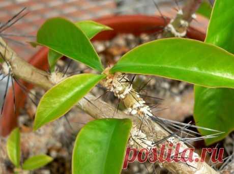 Кактусы: фото разных видов с названиями