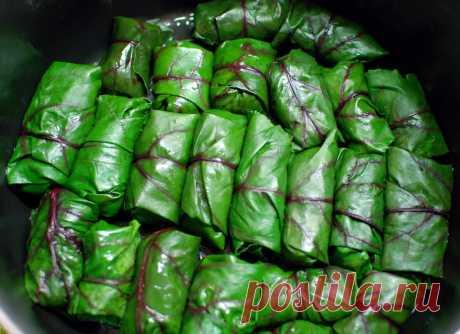 Полезные вкусняшки, которые можно приготовить из свекольной ботвы | Fermoved | Яндекс Дзен