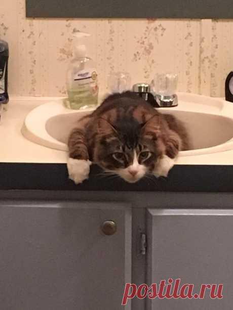 24 доказательства того, что кошки всегда найдут себе место
