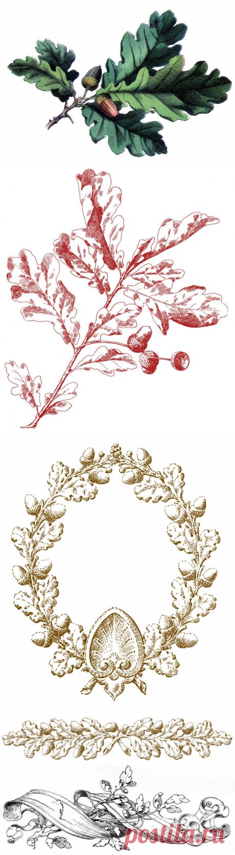 16 изображений дубовых листьев с желудями - Фея графики