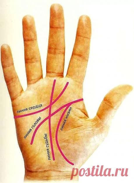 Гадание по руке для начинающих по основным линиям. Что может рассказать о вас линия жизни, сердца и головы? | Лисичка | Яндекс Дзен