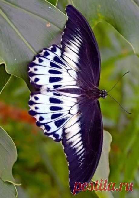 Fantástico Natureza,linda!!!