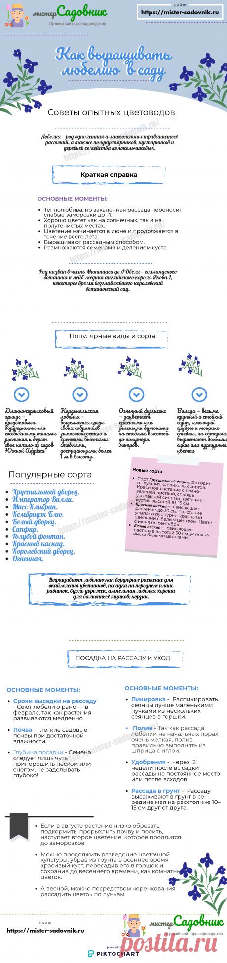 Цветок лобелия - описание с фото и правила выращивания