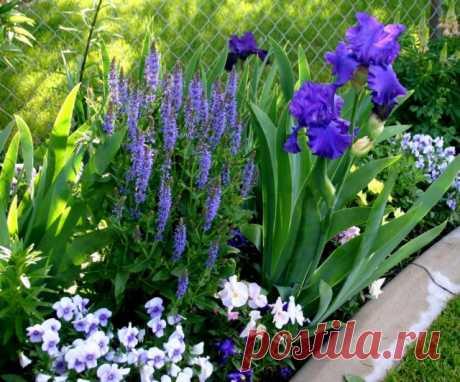 Los tríos ideales. Los macizos de flores de solamente de tres mnogoletnikov. La foto — Ботаничка.ru