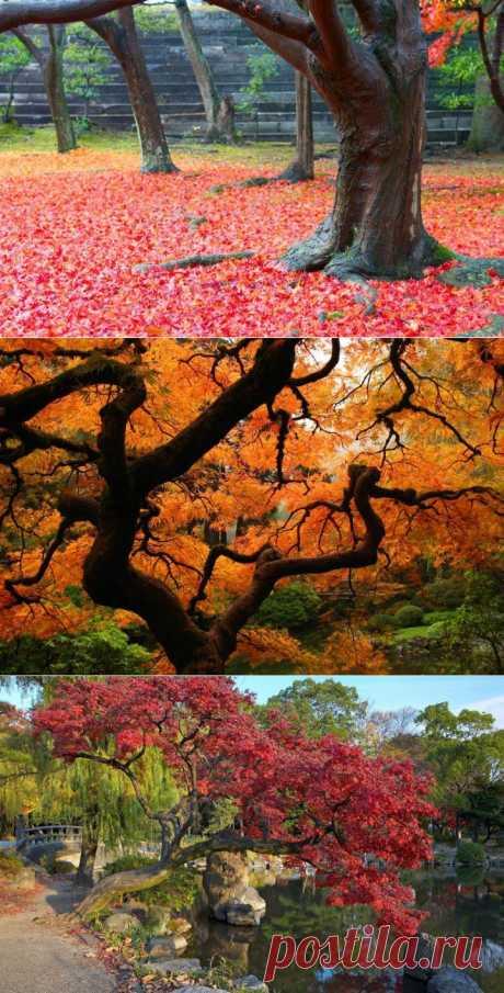 (+1) тема - Осень в Японии | ТУРИЗМ И ОТДЫХ