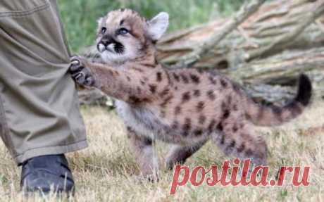 Смешные детеныши животных